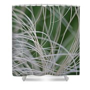 Abstract Image Of Tropical Green Palm Leaves  Shower Curtain
