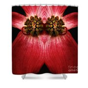 Nature In Abstract Dogwood Blossom 2 Shower Curtain