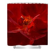 Abstract Red Rose 1a Shower Curtain