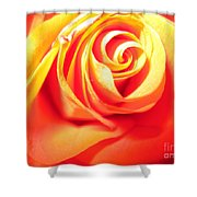 Abstract Rose 2 Shower Curtain