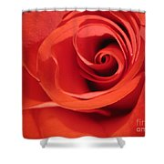 Abstract Orange Rose 9 Shower Curtain