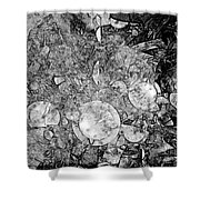 Abstraction B-w 0572 - Marucii Shower Curtain