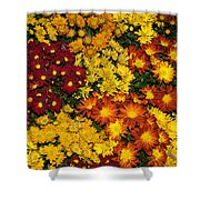 Abundance Of Yellows Reds And Oranges Shower Curtain