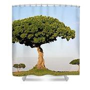 Acacia Trees Masai Mara Kenya Shower Curtain