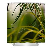 Acacia Water Drops Shower Curtain