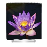 Accents On A Purple Waterlily... Shower Curtain