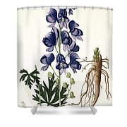 Aconitum Napellus Shower Curtain