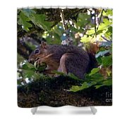 Acorn Grip Shower Curtain