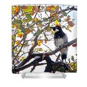 Acorn Woodpecker In Tree  In Park Sierra-ca Shower Curtain