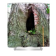 Acorns And Incense Shower Curtain