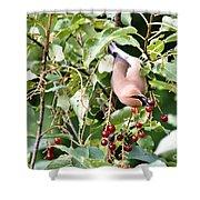 Acrobird Shower Curtain