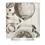 Adam's Apple Shower Curtain by Cornelis Bloemaert