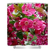 Adams Crabapple Blossoms Shower Curtain