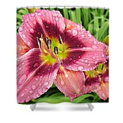 Addie Branch Smith Daylily Drops Shower Curtain