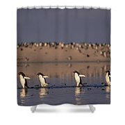 Adelie Penguin Group Commuting Cape Shower Curtain