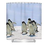 Adelie Penguin Group Running Antarctica Shower Curtain