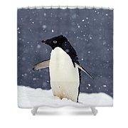 Adelie Penguin Standing In Fresh Shower Curtain