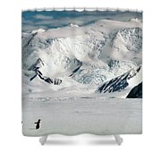 Adelie Penguins At Cape Hallett Shower Curtain
