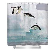 Adelie Penguins Diving Off Iceberg Shower Curtain