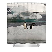 Adelie Penguins On Ice Shower Curtain