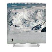 Adelie Penguins Trekking On The Ice Shower Curtain