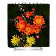 Adirondack Flowers Shower Curtain