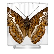 Admiral Limenites Butterfly Shower Curtain