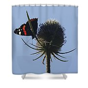 Admiral Teasel Shower Curtain