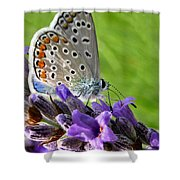 Adonis Blue Butterfly Of Monteriggioni Shower Curtain