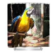 Adopted Macaw - Rescued Parrot Shower Curtain