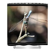 Adorable Dragonfly With Border Shower Curtain