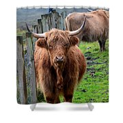 Adorable Highland Cow Shower Curtain