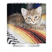 Adorable Kitten Shower Curtain