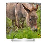 Adorable Mini-burro Shower Curtain