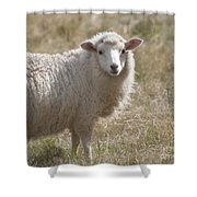 Adorable Sheep Shower Curtain