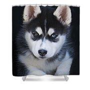 Adorable Siberian Husky Sled Dog Puppy Shower Curtain