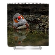 Adorable Zebra Finch Taking A Bath Shower Curtain