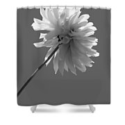 Adored In Bw Shower Curtain