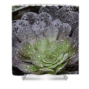 Adorned By Raindrops Shower Curtain