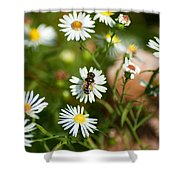 Adult Female Drone Fly Aka Bee Mimic Shower Curtain