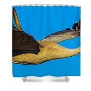 Adult Sandhill Crane Shower Curtain