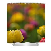 Advent Of Spring Shower Curtain