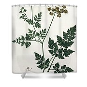 Aethusa Cynapium From Phytographie Shower Curtain