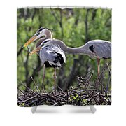 Affectionate Great Blue Heron Mates Shower Curtain