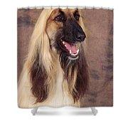 Afghan Hound Dog, Portrait Shower Curtain