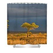 African Acacia Sunrise Shower Curtain