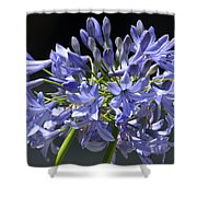 African Blue Lily Shower Curtain