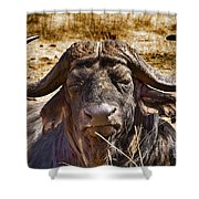 African Buffalo V3 Shower Curtain