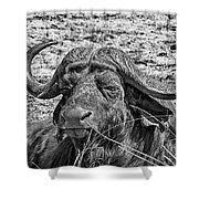African Buffalo V4 Shower Curtain