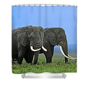 African Bull Elephants In Rain Endangered Species Tanzania Shower Curtain